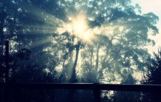 木の中の光