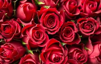 赤いバラたち