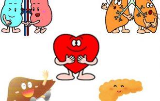 五臓のイラスト
